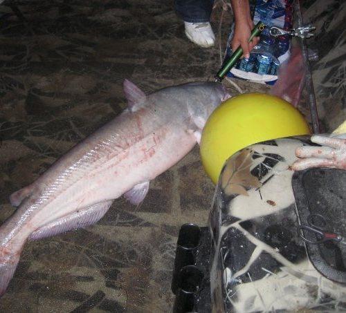 stlcatfishing_0081