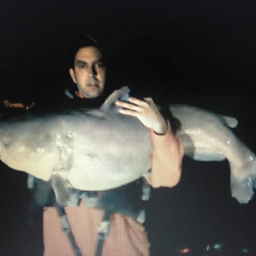 stlcatfishing_0100